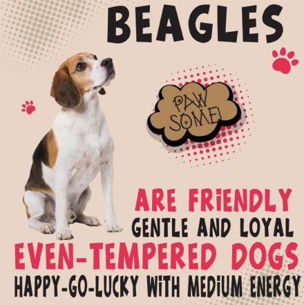 Beagles Metal Wall Sign